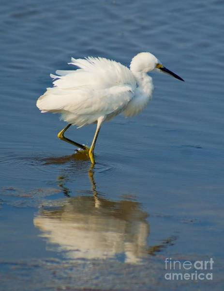Photograph - Shore Bird Reflection by Nick Zelinsky