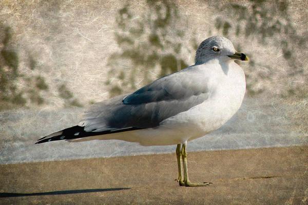 Seagulls Mixed Media - Shore Bird by Trish Tritz