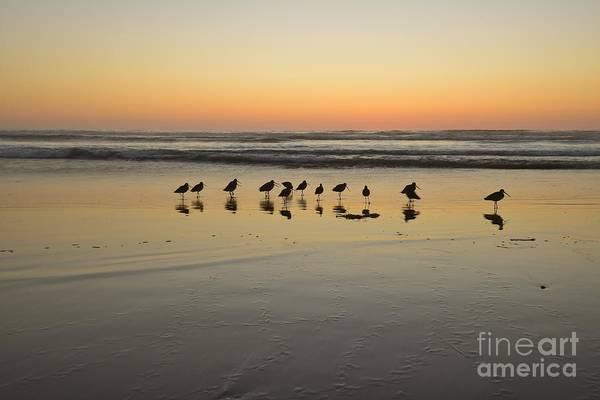 Photograph - Shorebird Sand Tracks 48x72 Print by John F Tsumas