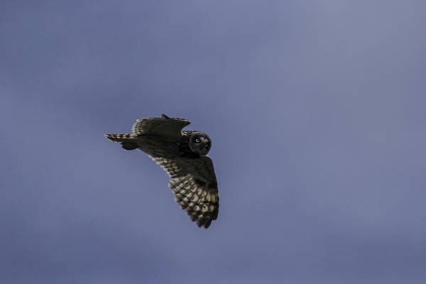 Photograph - Short Eared Owl In Flight by Brad Scott