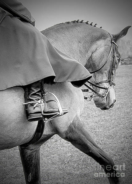 Wall Art - Photograph - Side Saddle Show Horse by Linsey Williams