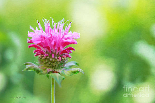 Photograph - Show Off by Beve Brown-Clark Photography