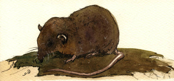 Mouse Painting - Shrew Mouse by Juan  Bosco