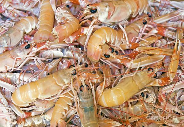 Craw Wall Art - Photograph - Shrimps by Sinisa Botas