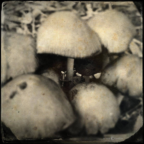 Photograph - Shroom Cafe by Tim Nyberg
