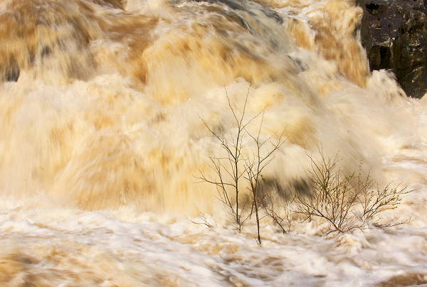 Photograph - Shrubs In The Rapids by Stuart Litoff