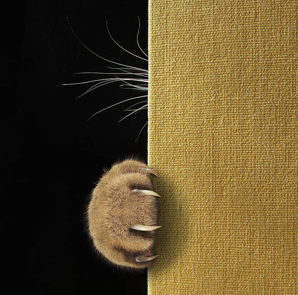Wall Art - Photograph - Shy Cat ... by Iryna Kuznetsova (iridi)