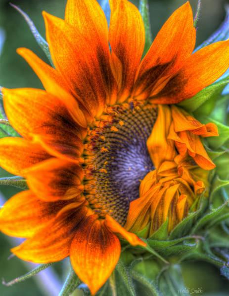 Sunflower Seeds Photograph - Shy Girl by Heidi Smith