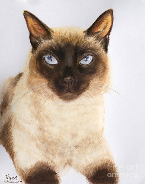 Art Print featuring the pastel Siamese Cat Over White by Kate Sumners