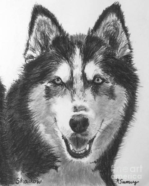 Art Print featuring the drawing Siberian Husky Drawing by Kate Sumners