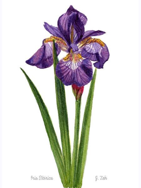 Siberian Iris II - Iris Sibirica Art Print