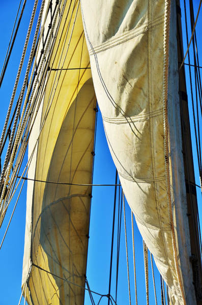 Sibling Sails Art Print