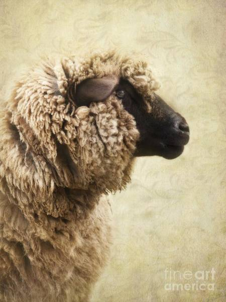 Wall Art - Photograph - Side Face Of A Sheep by Priska Wettstein