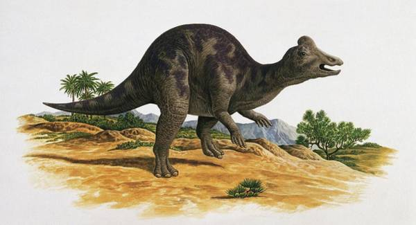 Cretaceous Wall Art - Photograph - Side Profile Of A Dinosaur by Deagostini/uig/science Photo Library