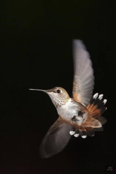 Rufous Hummingbird Wall Art - Photograph - Side Slip by Jim Tobin