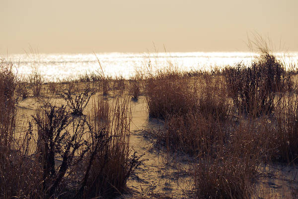 Mixed Media - Sierra Sunrise by Trish Tritz