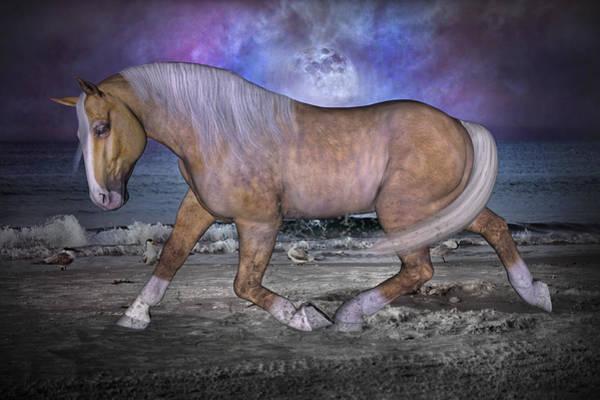 Palomino Horse Mixed Media - Siesta Moon by Betsy Knapp