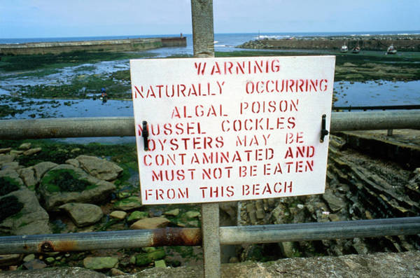 Wall Art - Photograph - Sign Warning Of Algal Poison by Robert Brook/science Photo Library