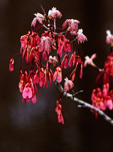 Photograph - Signs Of Spring by Andy Crawford