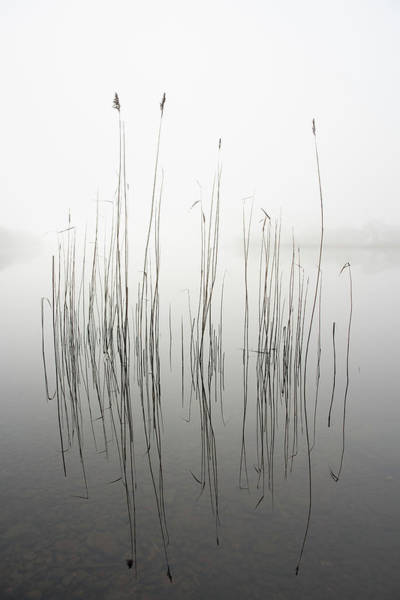 Simple Wall Art - Photograph - Silence by David Ahern