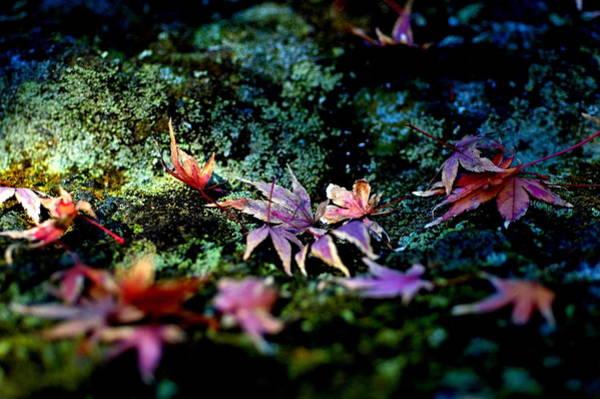 Kamakura Wall Art - Photograph - Silence Of My Life by Kaorua