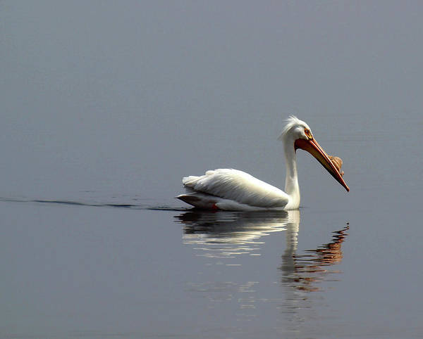 Photograph - Silent And Reflective by Thomas Young