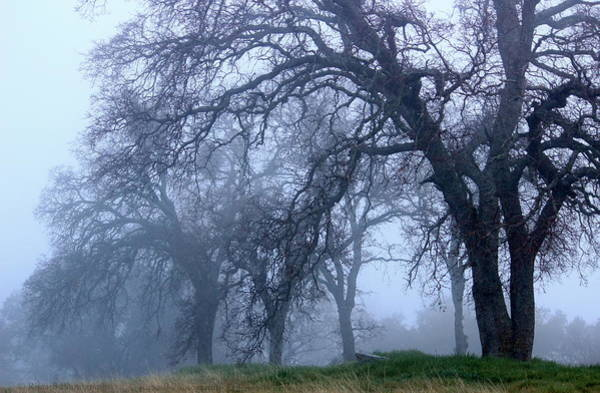 Photograph - Silent Forest by Rima Biswas