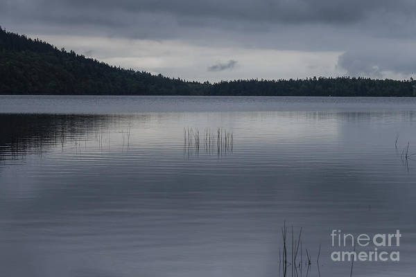 Wall Art - Photograph - Silent Lake Eagle by Patricia Hofmeester