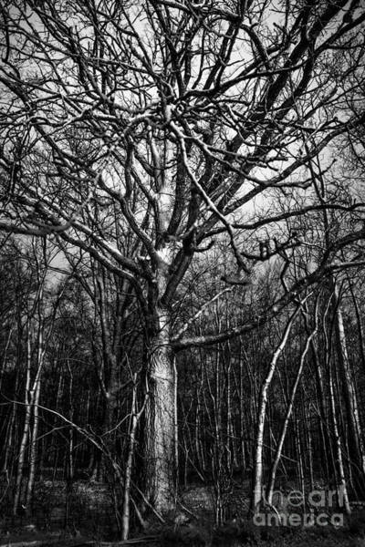 Photograph - Silent Trees by Michael Arend