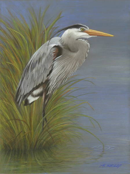 Great Blue Heron Drawing - Silent Watch by Heather Mitchell