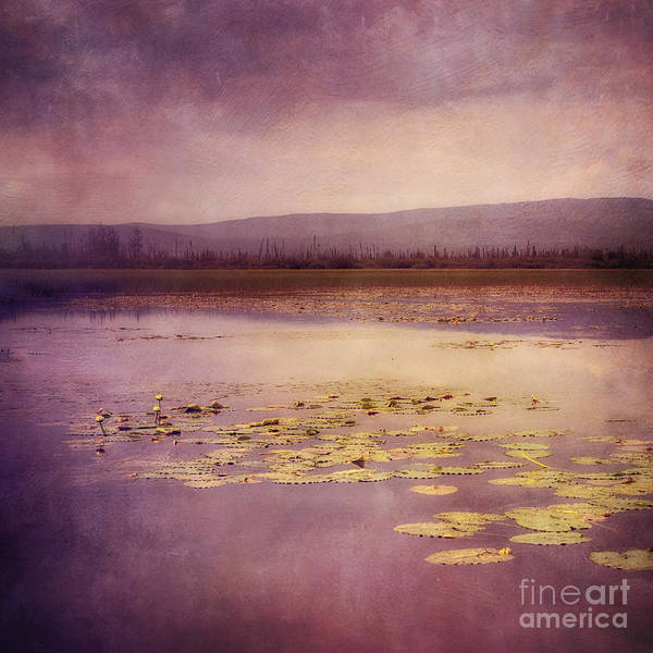 Wall Art - Photograph - Silent Water  by Priska Wettstein