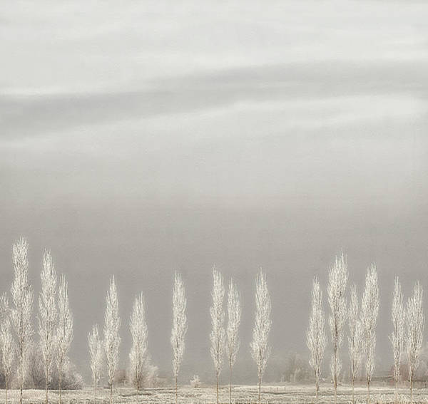 Frost Wall Art - Photograph - Silent World by Yvette Depaepe