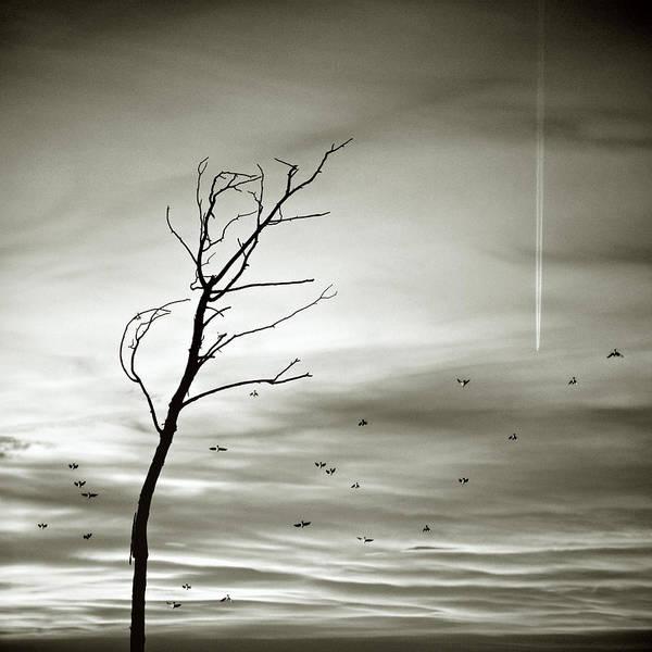 Silhouette Photograph - Silhouette Birds In Flight by Luis Mariano González