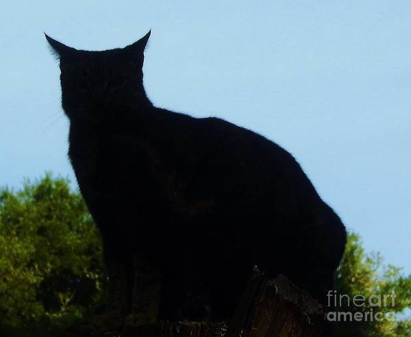Photograph - Silhouette Cat by D Hackett