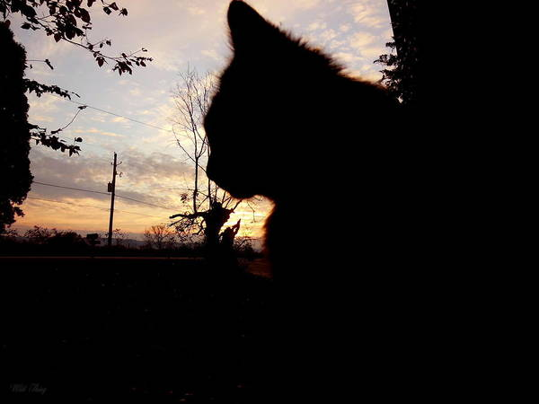 Photograph - Silhouette Cat by Wild Thing