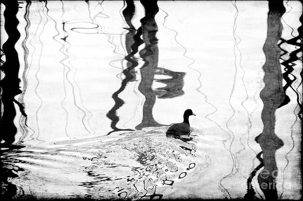 Photograph - Silhouette Duck In Water With Reflections by Dan Friend