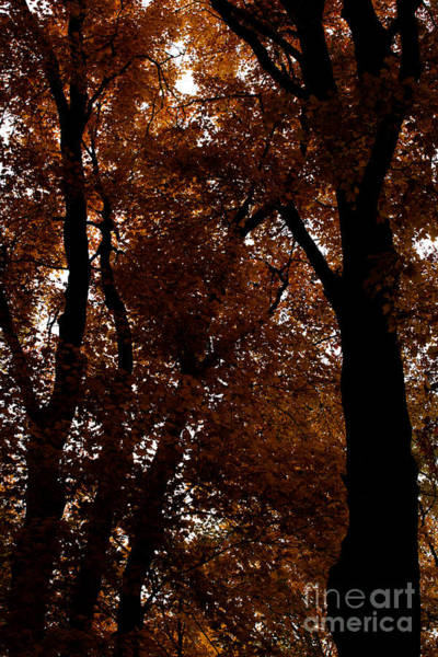 Photograph - Silhouette In Amber by Linda Shafer
