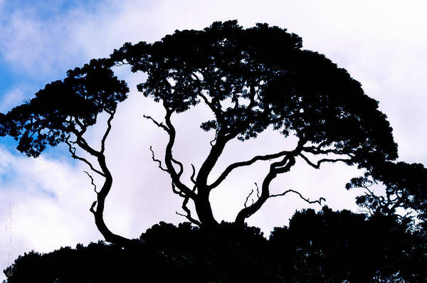 Photograph - Silhouette by Jim Thompson