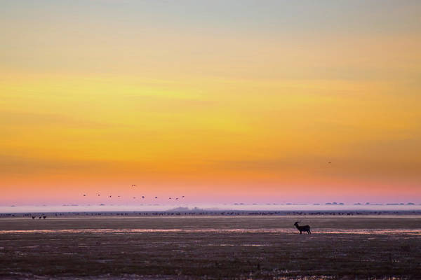 Silhouette Photograph - Silhouette Of Black Lechwe Or Bangweulu by Morgan Trimble