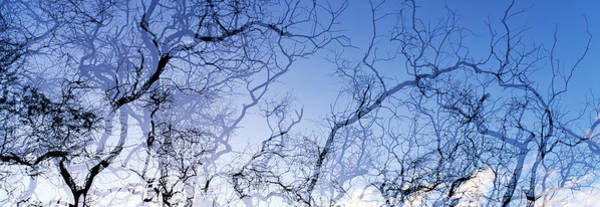 Lanai Photograph - Silhouette Of Branches Of A Tree by Panoramic Images