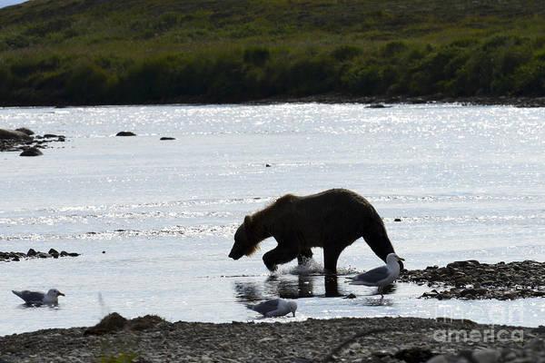 Photograph - Silhouette Of Brown Bear by Dan Friend