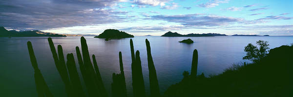 Sea Of Cortez Photograph - Silhouette Of Cardon Cacti Pachycereus by Panoramic Images