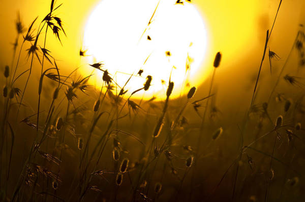 Peacefulness Photograph - Silhouette Of Grass At Sunrise, Tanzania by Panoramic Images