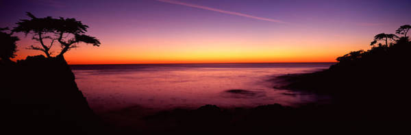 Carmel By The Sea Photograph - Silhouette Of Lone Cypress Tree by Panoramic Images