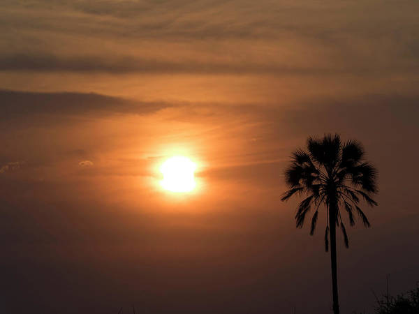 Okavango Delta Photograph - Silhouette Of Palm Tree At Dusk by Panoramic Images