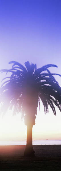 Wall Art - Photograph - Silhouette Of Palm Tree On Beach by Panoramic Images