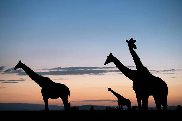 Silhouette Photograph - Silhouette Of Small Group Of by Martin Harvey