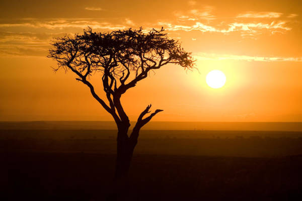 Peacefulness Photograph - Silhouette Of Tree At Dusk, Tanzania by Panoramic Images