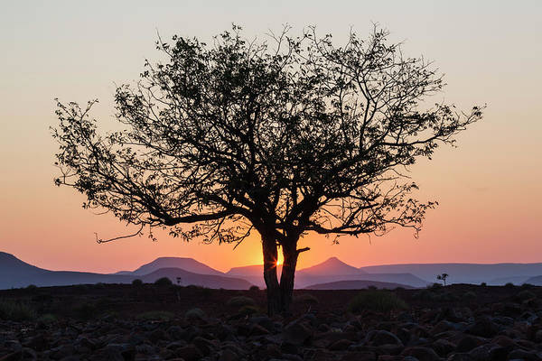 Silhouette Photograph - Silhouette Of Tree In Desert At Sunrise by Pixelchrome Inc