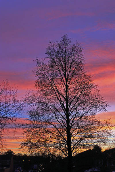 Photograph - Silhouette Of Tree by Tony Murtagh